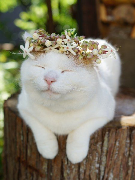 animals wearing flower crowns