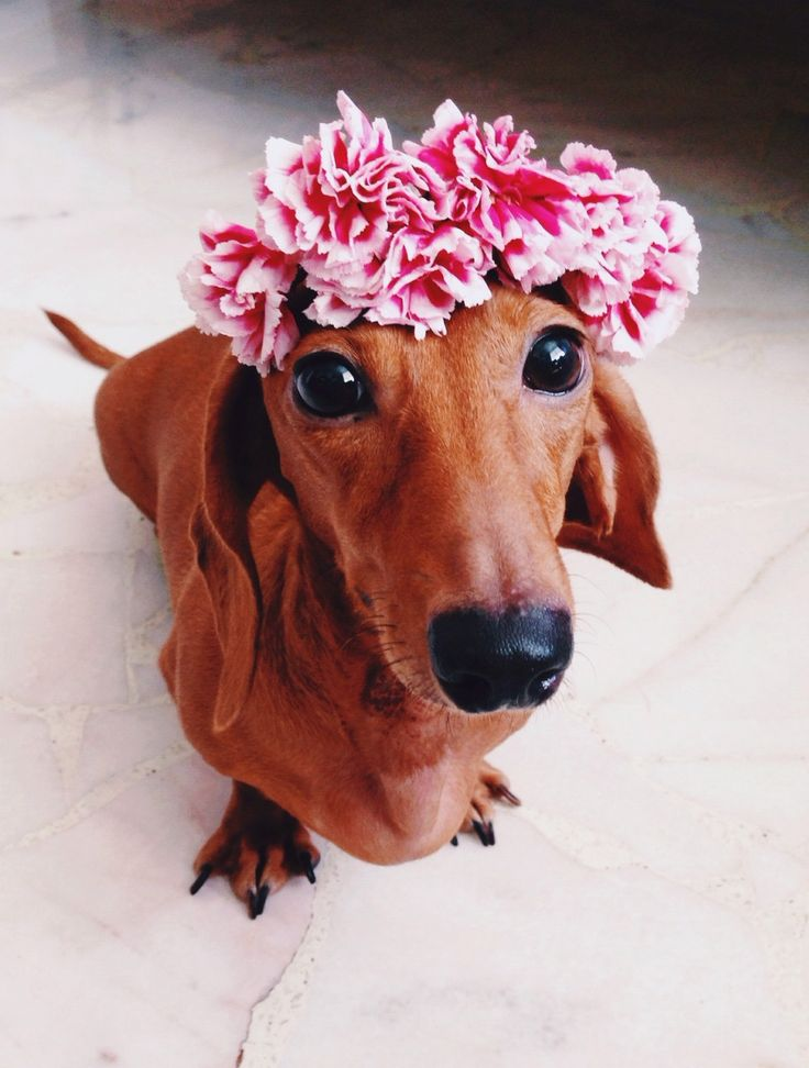 animals wearing flower crowns 2