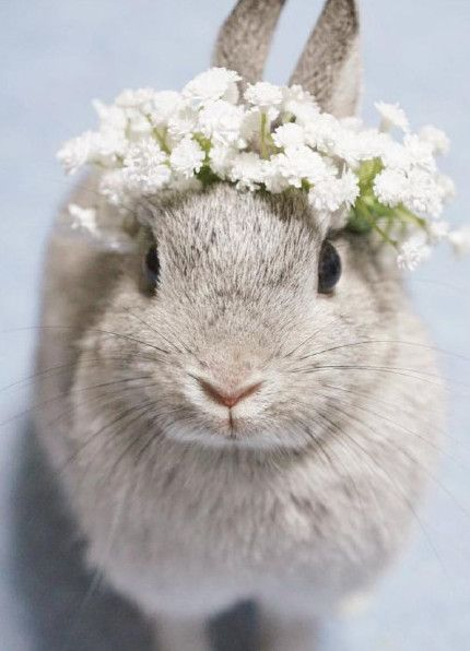 bunny wearing flower crown