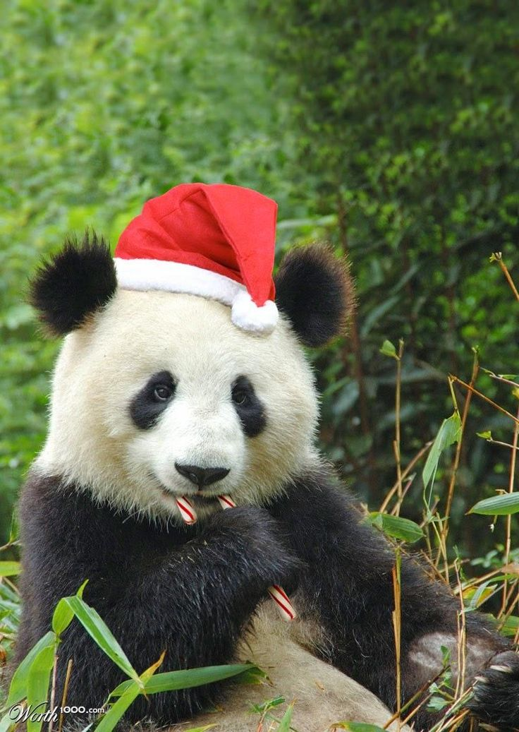 10 of the cutest animals showing their christmas spirit page 2 of