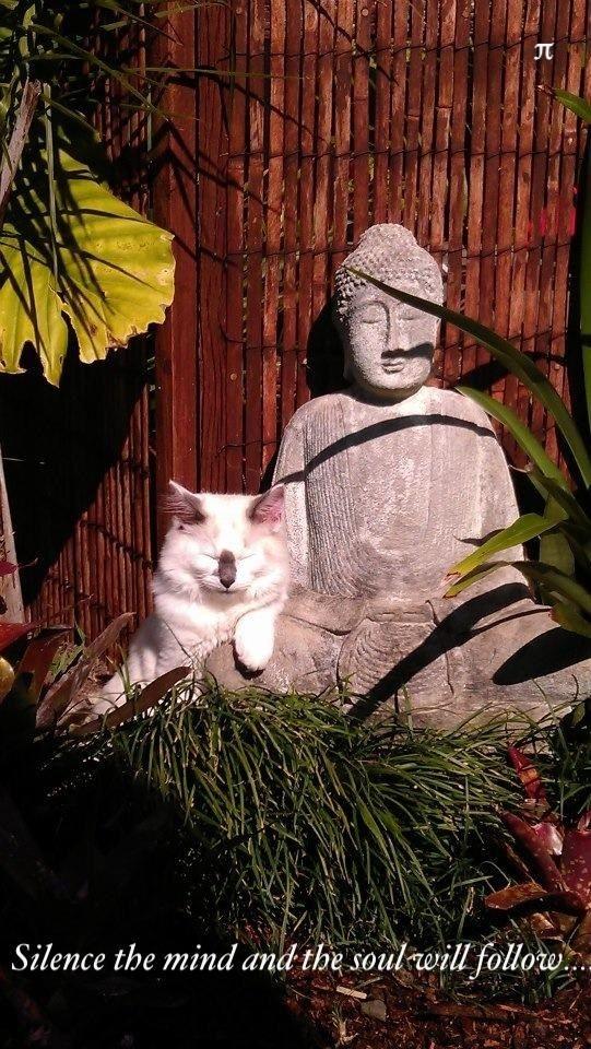 zen animals